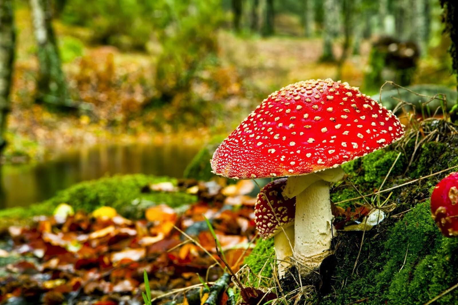 Foto's thema herfst